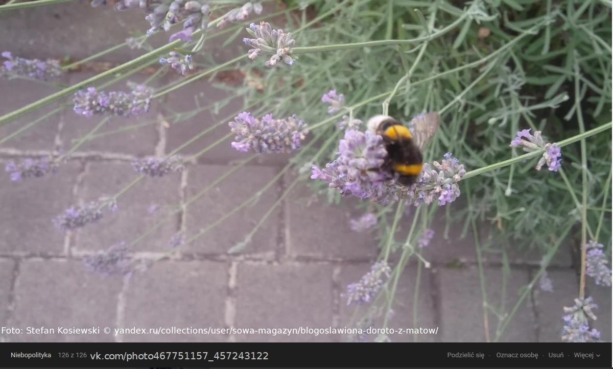 Screenshot_2020-07-25 1 z 1 zdjęć przesłano